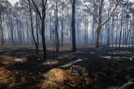Bushfire Recovery Grant