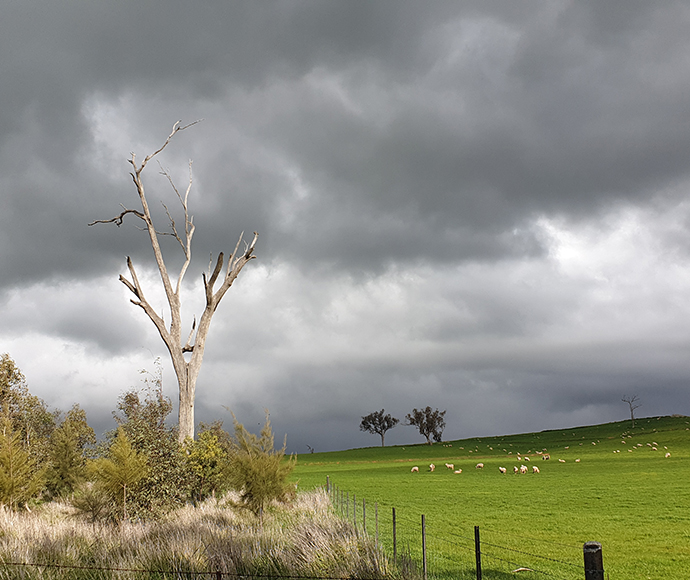 Each 30-minute episode features a mix of SoS partners, including landholders, threatened species experts and businesses, discussing the positive outcomes they have experienced through adopting biodiversity-friendly land practices in different settings